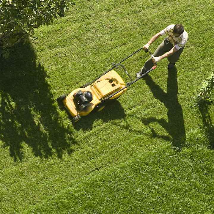 mowing lawn with push mower